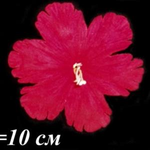 Лилия бархатная резная (уп. 100 шт.)